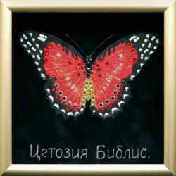Бабочка «Библис»