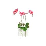 Декоративные цветы Орхидея тем розовая в керамической вазе