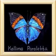 Бабочка «Каллима»