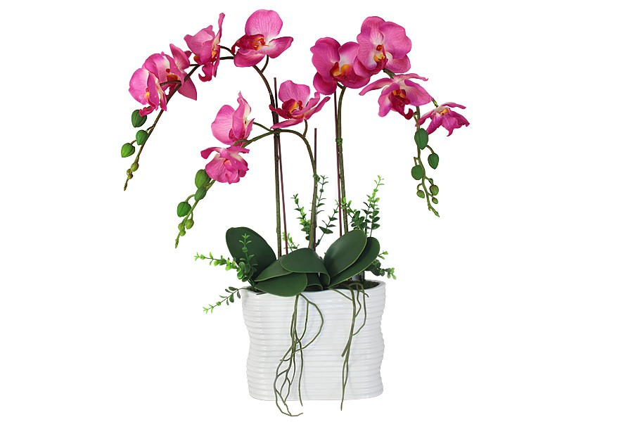 полученных дивидендов купить орхидею в горшке в интернет магазине недорого хорошо
