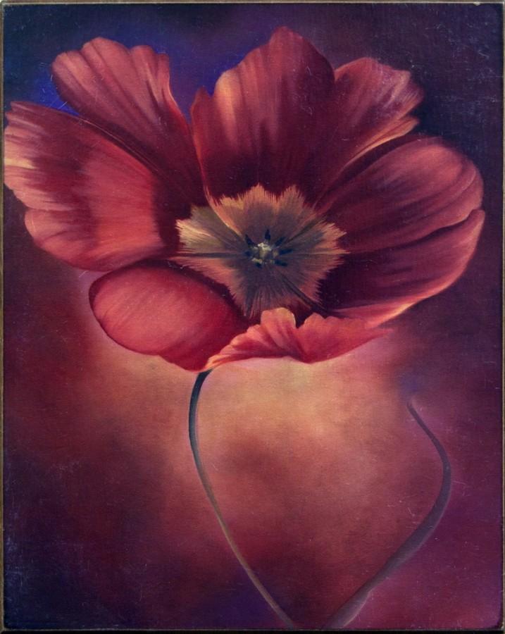 Картина «Тюльпан» (Alessandro Zucconi)